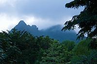 El Yunque National Rain Forest<br /> Puerto Rico