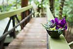 Decorative flower arrangement at Daintree Eco Lodge and Spa.  Daintree, Queensland, Australia
