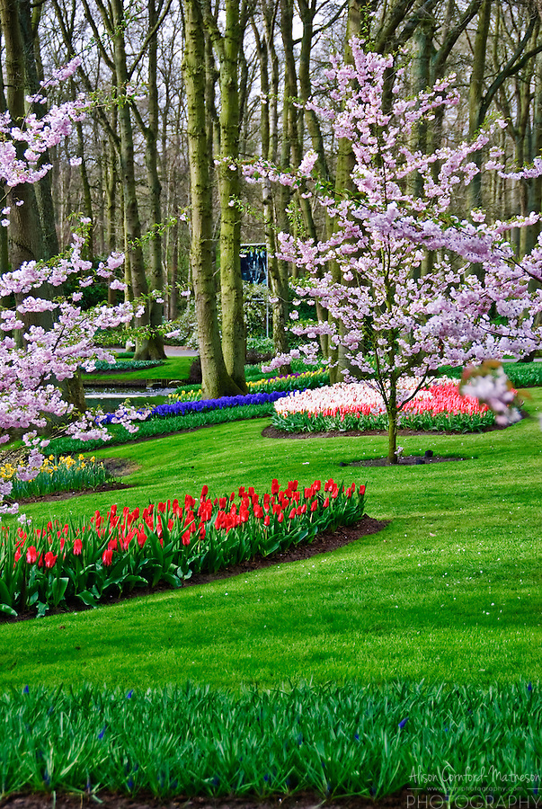 Keukenhof Spring Tulip Gardens, Lisse, The Netherlands.