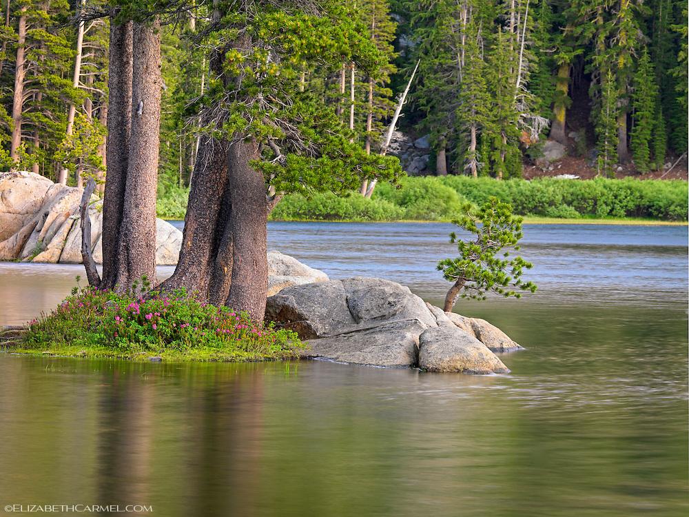 Summer Pond, High Sierra