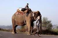 Scarlett with an elephant and its mahut on the road to Ghazipur district.