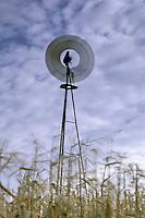 Spinning Farm Windmill in Cornfield