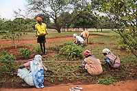 Workers and a resident working in a garden of Aurovill, Pondicherry. Arindam Mukherjee