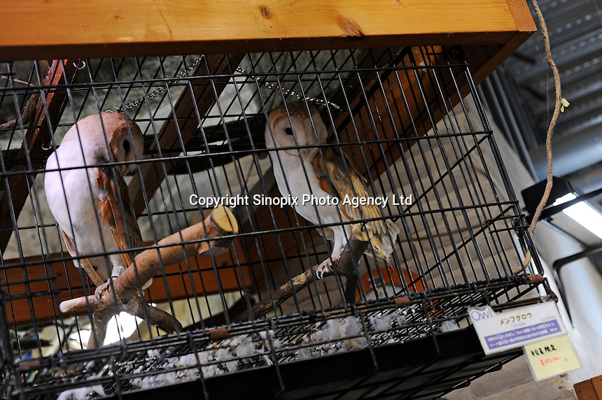 Barn Owls for sale at the Noah Inner City Zoo - a pet shop that sells exotic animals- for 252000 yen (2800 US$).  The Zoo claims to have more than 300 species for sale, many are exotic and rare animals - some endangered.