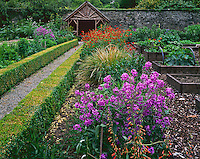 County Cork, Ireland  <br /> Pathway leading through the flower and vegetable beds in the Walled Garden at Creagh Gardens at Skibberdeen