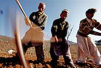 Men tend to their fields in a village near Peshawar.