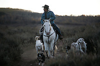 A shepherd rides Dot, a trained wild mustang, trailing sheep in Upper Gully with the help of border collies and Pyranees guard dogs.<br />