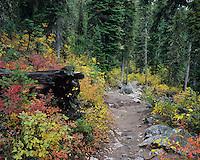 Fall colors along Jenny Lake Trail, Jenny Lake, Grand Teton NP,Wyoming, USA