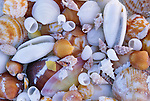 Close-up of shells, Pinar del Río Province, Cuba