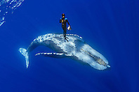 diver and humpback whale, Megaptera novaeangliae, Hawaii, Pacific Ocean, model released