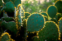 Stock photo of the detail of a  cactus.