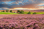 View of Danby Dale and and moors farm with heather flowering.  North Yorks National Park, North Yorkshire, England