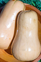 Butternut squash winter vegetable in wooden bowl havested, picked, two