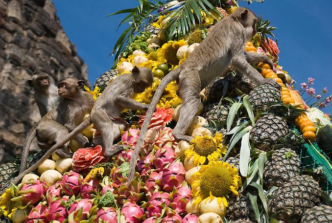 Monkeys climb on the pyramid of Fruit Display at the Lop Buri Monkey Festival