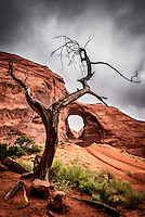 A dead juniper tree frames an arch in red sandstone located in a remote section of Monument Valley