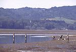 Clammers at Bolinas Lagoon at low tide