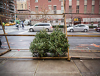A Christmas tree vendor displays his meager remaining inventory in New York on Christmas Eve, December 24, 2015. Christmas Eve is predicted to have the warmest temperatures on record in the city topping out in the 70's and Christmas Day won't be much better, in the 60's.  (© Richard B. Levine)