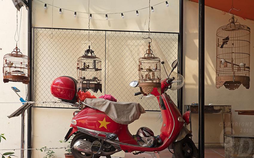 Scooter and Birds, Street scene in Hanoi, Vietnam