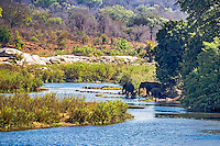 Elephants enjoying a bit of shade beside the Sabi River in Kruger National Park of South Africa.