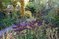 Path through mixed border in autumn with Sedum, grasses, Hornbeam columns Gary Ratway garden
