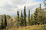 Givat Hamore forest