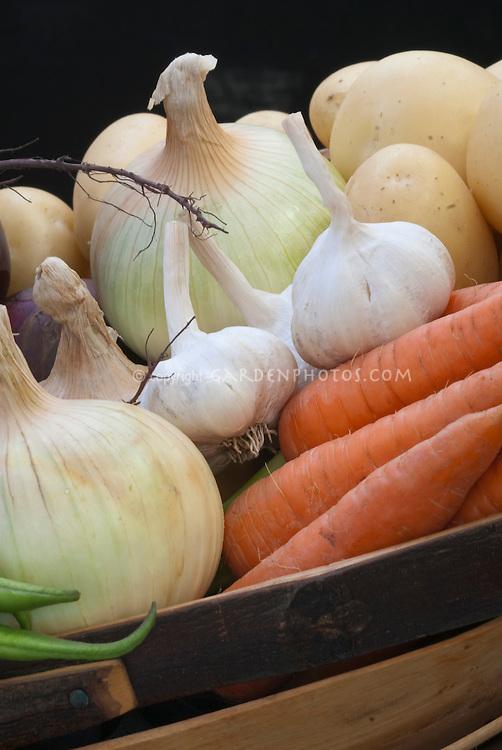 Harvest of root vegetables in basket trug