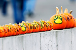25 October 2009: The University of Vermont Catamounts are represented by painted pumpkins during a game against the Columbia University Lions at Moulton Winder Field in Burlington, Vermont. The Lions shut out the Catamounts 1-0. Mandatory Credit: Ed Wolfstein Photo