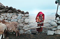 A Kyrgyz girl named Aye Gul is closing the shepherd's pen, to avoid wolf or snow leopard attacks at night...Ech Keli, Er Ali Boi's camp, one of the richest Kyrgyz in the Little Pamir..Trekking with yak caravan through the Little Pamir where the Afghan Kyrgyz community live all year, on the borders of China, Tajikistan and Pakistan.