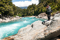 Beautiful turquoise waters and rocky banks of Copland River, Westland Tai Poutini National Park, UNESCO World Heritage Area, West Coast, New Zealand, NZ