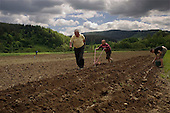 Gvozdetc, Ukraine.June 1, 2005 ..Kathine, 65,  and Mikhail Pavlikovski, 70, plow their fields without a horse to plant potatoes. They do this because the land was flooded. It is not uncommon to see this.