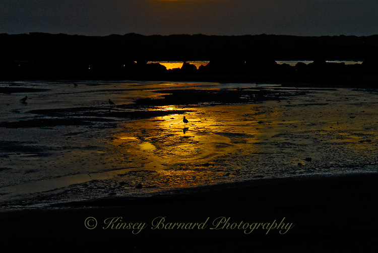 Seagull standing in the spotlight of a Florence, Oregon sunset.