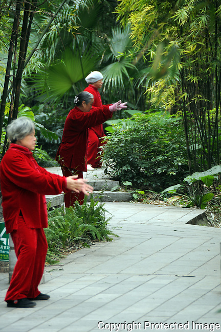 elder women, dressed in red velvet suits, perform an early morning tai chi ritual in a bamboo grove in a Guilin park, China