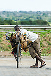 An informal trader selling chickens from his bicycle, Caia, Zambezi River Floodplain, Sofala Province, Mozambique