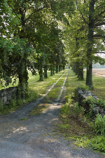Tree lined farm lane in morning, in the scenic  rural countryside of New York, NY, USA.