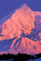 Pink alpenglow on the snow covered Mt Brooks of the Alaska range mountains. Denali National Park, Alaska.