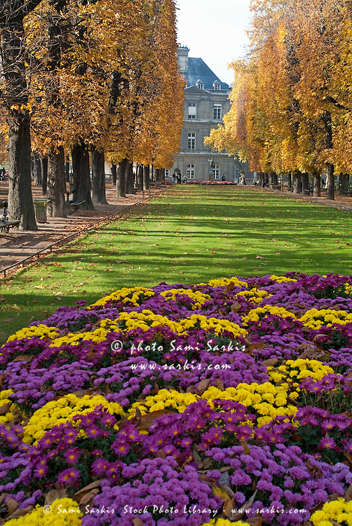 France on pinterest marseille disneyland paris and french food - Flowers that bloom in autumn ...