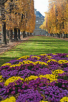 Vibrant flowers in full bloom during autumn in Tuileries Garden, Paris, France.
