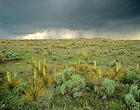Thunderstorm over Great Plains in the Comanche National Grasslands, Baca County, southeast Colorado, AGPix_0294.