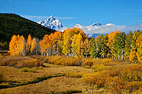 Fall Colors at Oxbow Bend in Grand Teton National Park.