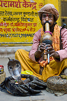 Snake charmer with king cobra snake by The Golden Temple during Festival of Shivaratri in holy city of Varanasi, Benares, Northern India RESERVED USE - NOT FOR DOWNLOAD -  FOR USE CONTACT TIM GRAHAM