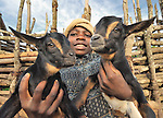 A boy cares for his family's goats in Matuli, Malawi.