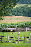 This image is from Billings Farm and Museum, Woodstock, Vermont.  2009.  This image is available for EDITORIAL USE ONLY.
