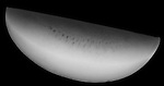 X-ray image of a watermelon section (white on black) by Jim Wehtje, specialist in x-ray art and design images.