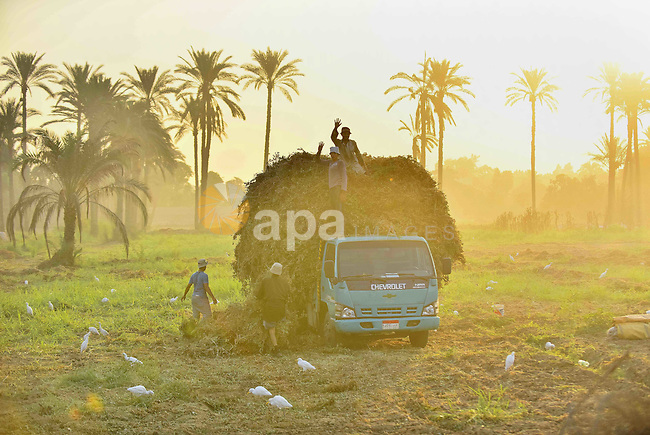 Egyptian villagers work at their field in Birqash outside of Cairo, Egypt, Sept. 30, 2015. Photo by Amr Sayed