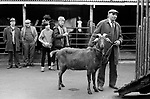 Southall weekly Wednesday Horse market London 1983.
