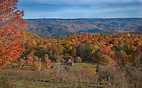 Bright fall foliage in a valley in the mountains in West Virginia with a barn and cows visible
