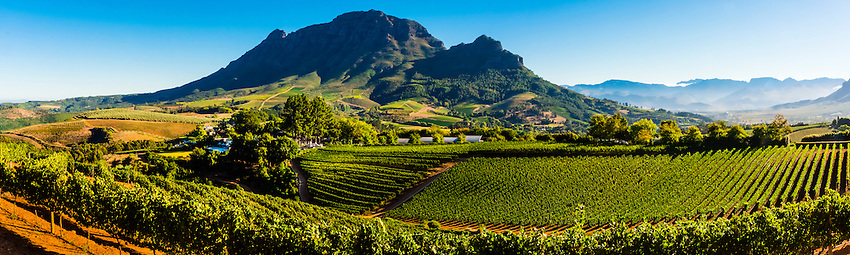 South Africa-Cape Winelands-Delaire  Graff-Vineyards & Harvest