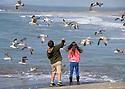 2016_04_16_feeding_seagulls