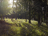 FOREST_LOCATION_90001