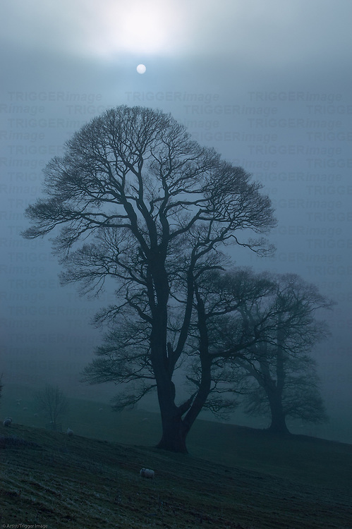The sun rises behind silhouetted trees on a foggy winter morning.  Lake District, Cumbria, UK